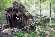 Don't despair! Fallen trees are vital to the health of our forests