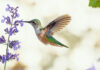 Follow These Tips for Attracting Birds to Your Yard