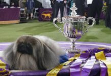 Westminster Dog Show 2021 Results: Best of Breed Winners and Final Recap