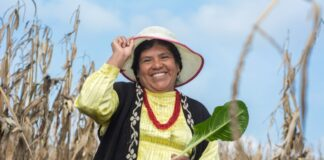 They improve the quality of life of Mexican families in food vulnerability