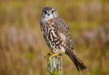 Game & Wildlife Conservation Trust receives grant of £247,900 from the Government's Green Recovery Challenge Fund